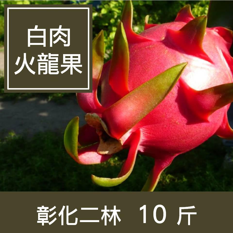 【一籃子】彰化二林【白肉火龍果】10斤