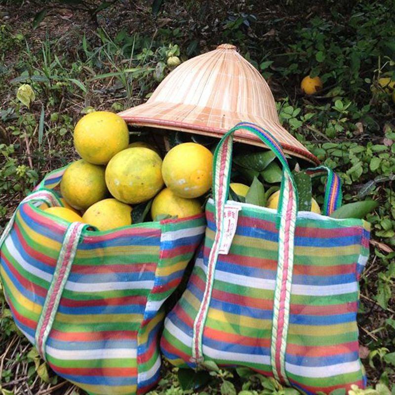 台灣農場趴趴走-[台南]採果體驗-仙湖休閒農場〔荔枝、龍眼、椪柑、柳丁〕