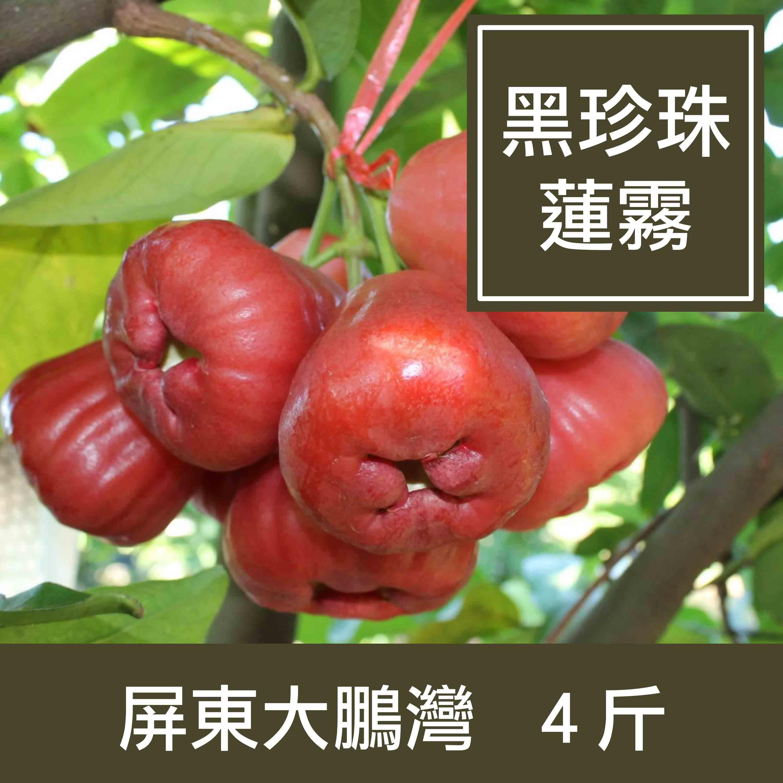 【一籃子】屏東大鵬灣【黑珍珠蓮霧】4斤