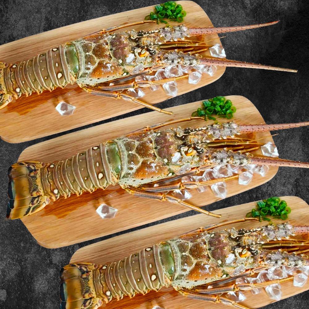 【鮮綠生活】野生花龍龍蝦(350克/隻)共2隻