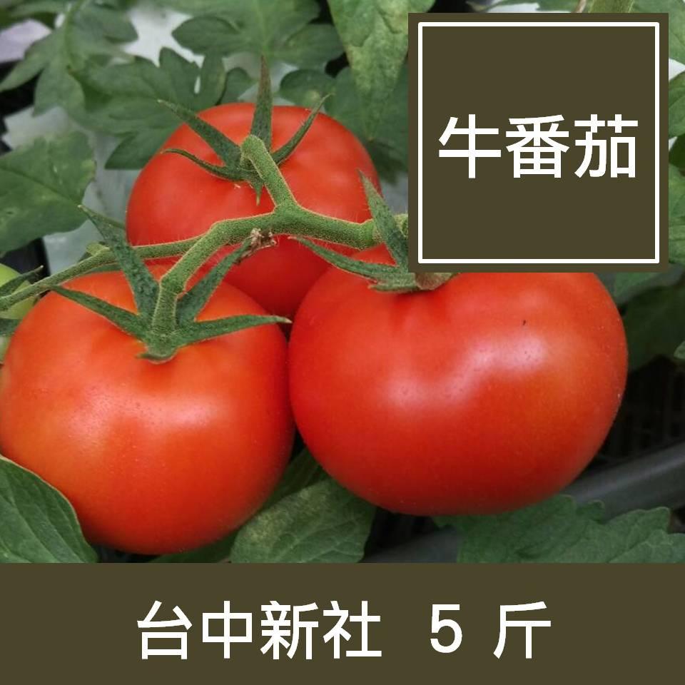 【一籃子】台中新社【牛番茄】5斤