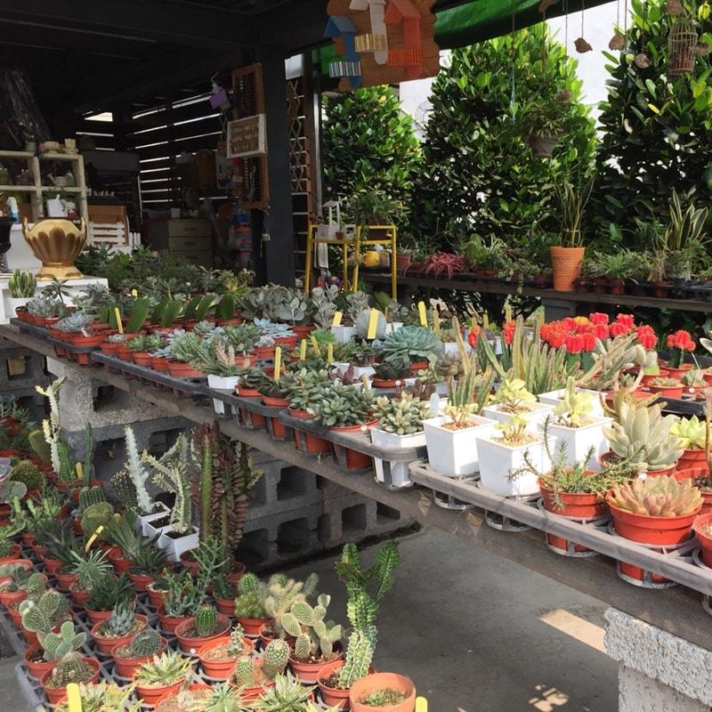 [雲林]采邑綠工坊-精緻農業體驗一日遊