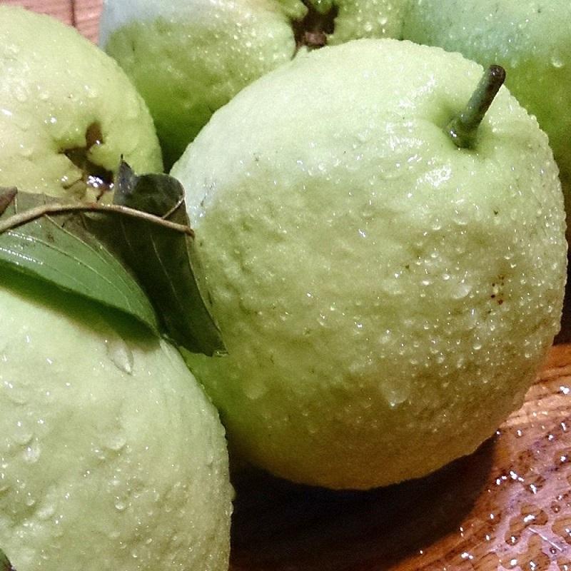 【綠安生活】燕巢牛奶珍珠芭樂1盒( 6斤/盒/12-14粒)